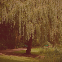 The Reaping Willow